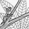 Rainforest mantis coloring page