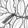 Rainforest caterpillar coloring page