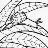 Rainforest snail coloring page