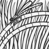 Rainforest dragonfly coloring page