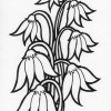 moon flower coloring page