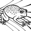 big spotted frog coloring page